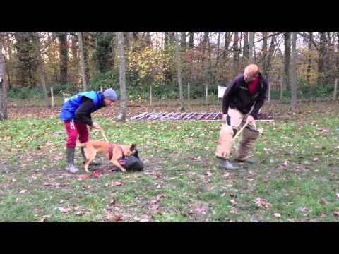 JCVD chiot malinois 6 mois en pension dressage - YouTube