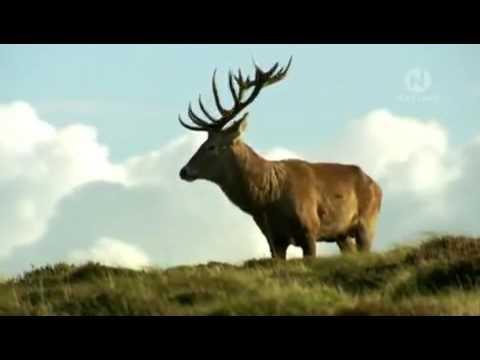 Дикая природа Уэльса