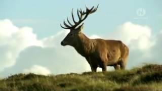 видео Природа Европы: флора и фауна