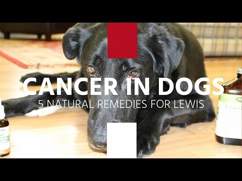 Natural Cures For Dogs With Cancerous Tumors