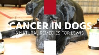 Cancer Dogs Natural Reme