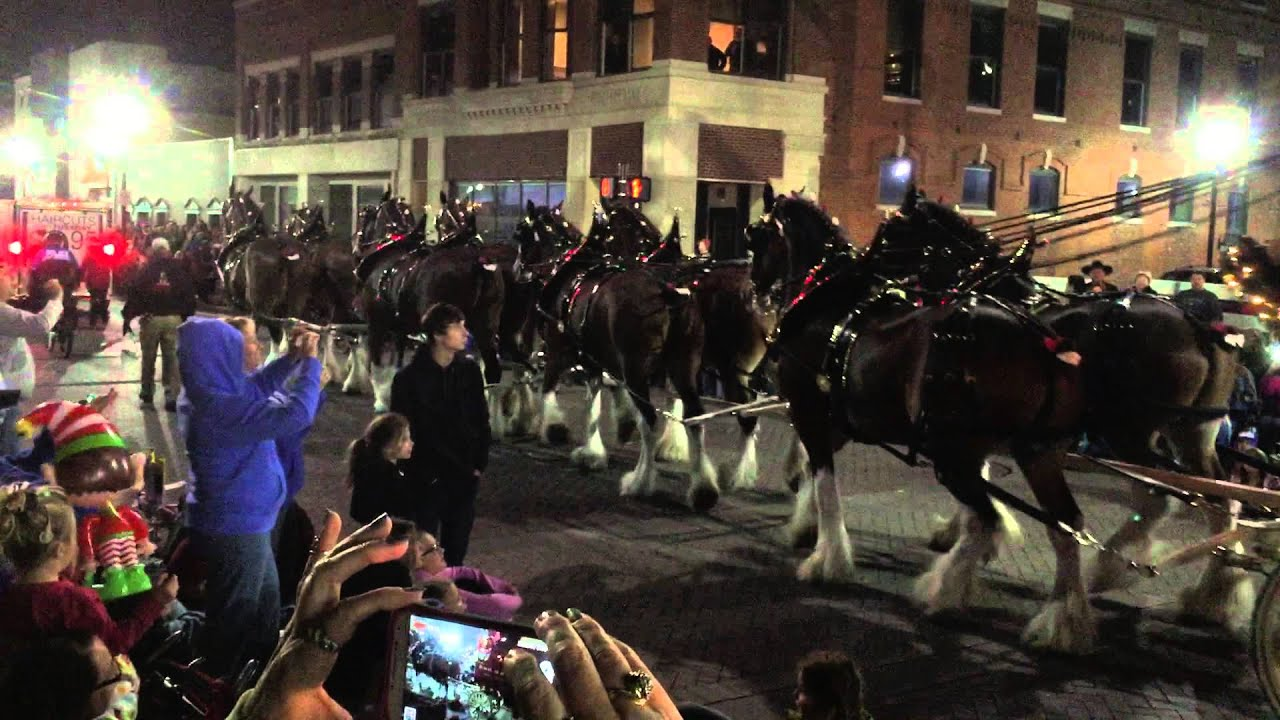 Budweiser Clydesdales - Owensboro, KY Christmas Parade 2014 - YouTube