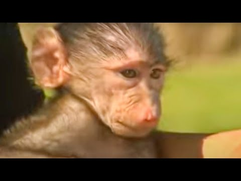 Animal rescue - orphaned wild animals - BBC wildlife