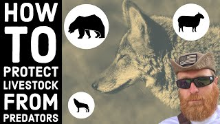 Do We Kill Coyotes? Managing Predators on the Ranch