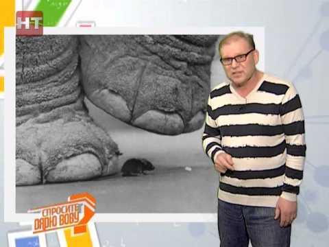 Спросите дядю Вову.Слон и мышка
