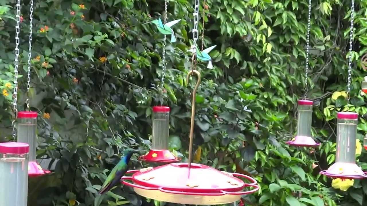 at el jardin encantado finca la tortuguita san francisco colombia mah