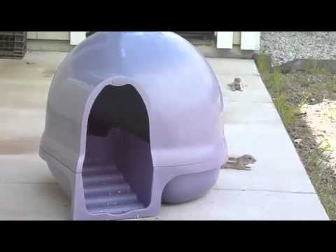 Operation Booda Clean Step Litter Box Successful For Chipmunks