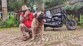 BHAYRAV DOG KENNEL | DOG BREEDER ! Mr Raj Suryawanshi ! FULL FARM TOUR AND LIFE STORY ! PART !