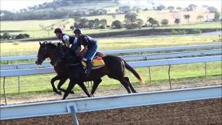 Rothesay X Bethany Colt In Pre-training At Bahram (10th October 2015)