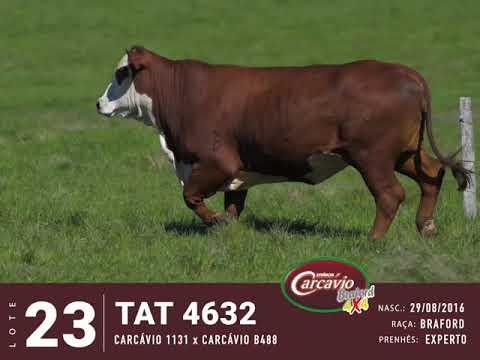 LOTE 23 - TAT 4632
