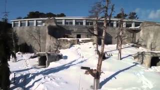 Bear Wakes From Hibernation To Find Snow