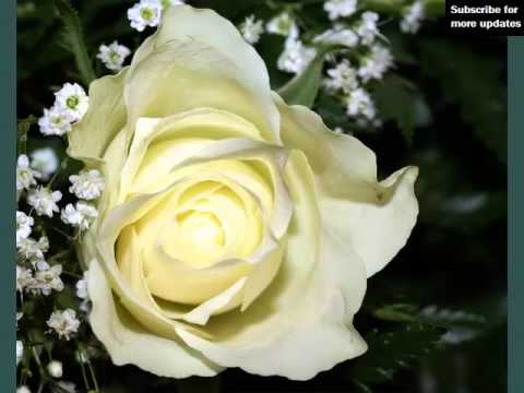 White rose flowers set of beautiful flower pictures youtube white rose flowers set of beautiful flower pictures mightylinksfo