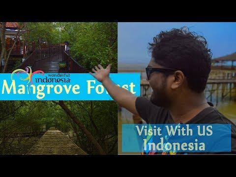 Mangrove Eco-tourism| free Entry| Surabaya tourism | Wonderful Indonesia