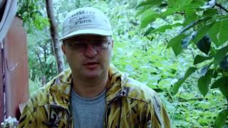 видео Ловчий пояс для деревьев своими руками