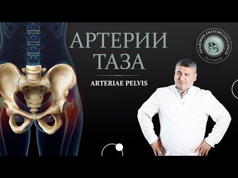Внутренняя подвздошная артерия. Артерии таза