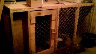 Dog Kennel Wood Stove. Cold Minnesota Winter Night.