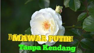 Download MAWAR PUTIH, TANPA KENDANG, NELLA KHARISMA Mp3