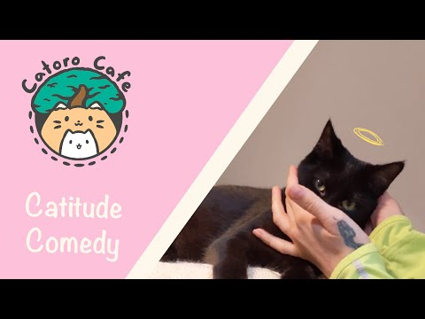 Catitude Comedy! - Living At A Cat Cafe