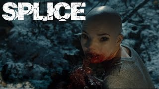SPLICE   Una nuova specie di B movie!
