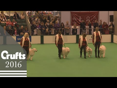 Obreedience Competition - Part 3 | Crufts 2016