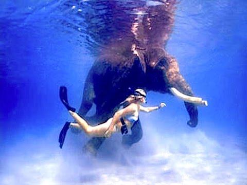 Underwater VLOG Episode 2 - Scuba Diving India's Andaman Islands   GoPro HERO Underwater HD