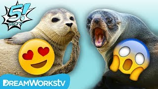 5 Cute Animals... That Are Actually Vicious!! | 5 FACTS