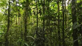 Usypiająca muzyka las tropikalny odgłosy natury 2020