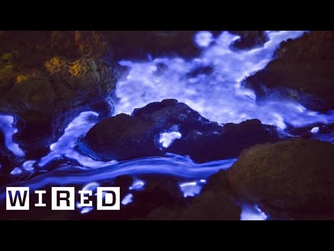 Talking Pictures | The Blue Lava of Indonesia