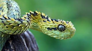 Змеи. Узнай больше!