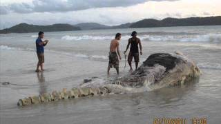 World most strangest creature found at Langkawi,Malaysia! A must see video!