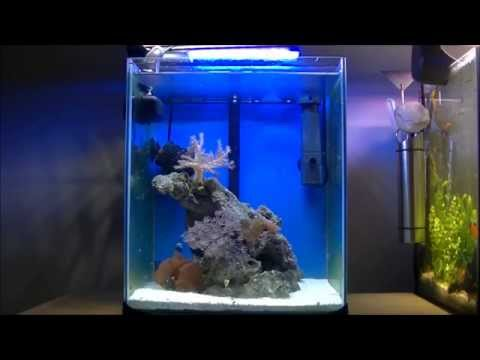 nano reef 30l youtube. Black Bedroom Furniture Sets. Home Design Ideas