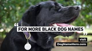 Best Black Dog Names