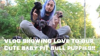 VLOG SHOWING LOVE TO OUR CUTE BABY PIT BULL PUPPIES!!