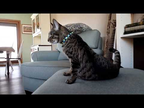 Kitten Dog and Cat all React to Robot Vacuum