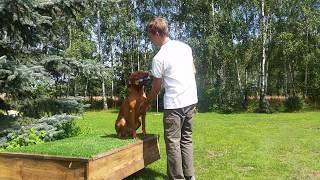 praktyczne wskazówki szkolenia psa myśliwskiego