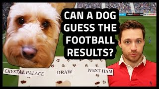 Can A Dog Predict Football Results?! | Accumulate