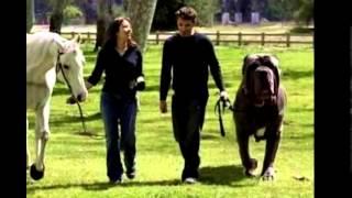 Копия видео Самые большие животные в мире