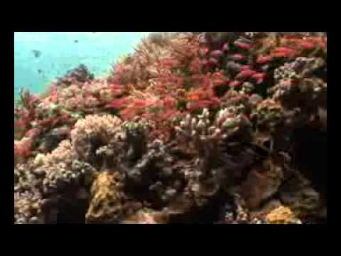 Walea dive resort a flower in the ocean series 2 of 2 - Walea dive resort ...