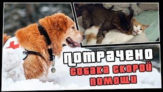 ПОТРАЧЕНО. Собака скорой помощи | Смешное видео | приколы 2020