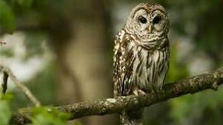 HUGE OWL BY DUCKS!!! |Ruby's Zoo