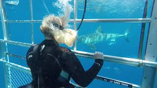 Shark cage diving in Port Lincoln, Australia for Mpora