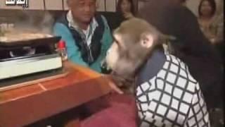 قرد يعمل في مطعم ياباني