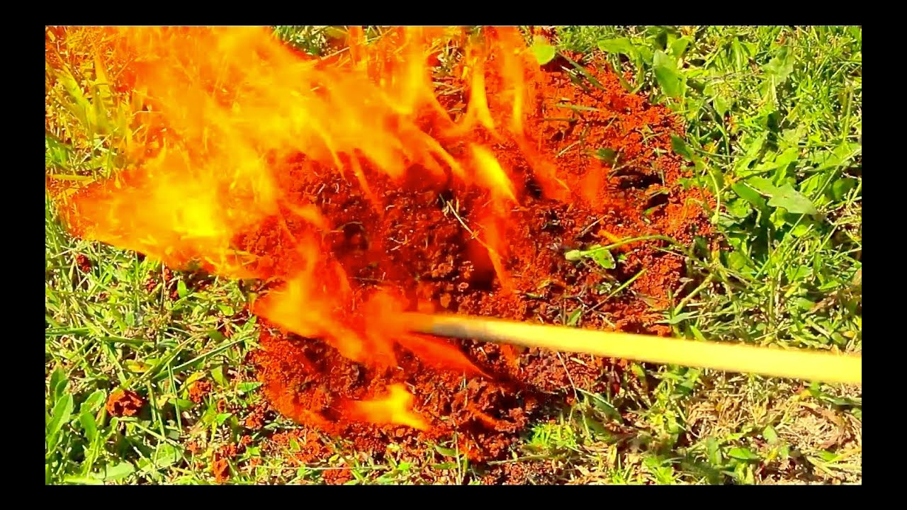 bit and stung by fire ants kill and burn them with gas and fire