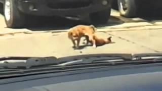 Perro Muere Mientras Tiene Sexo . Dog Died Snusnu - Perro Muere Mientras Se Aparea