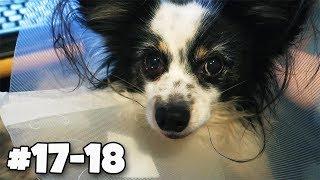 MÓJ PIESEK MIAŁ OPERACJĘ 🐶 #17-18 Vlogmas 2017