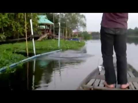 ลุยวังชะโด แม่น้ำท่าจีน