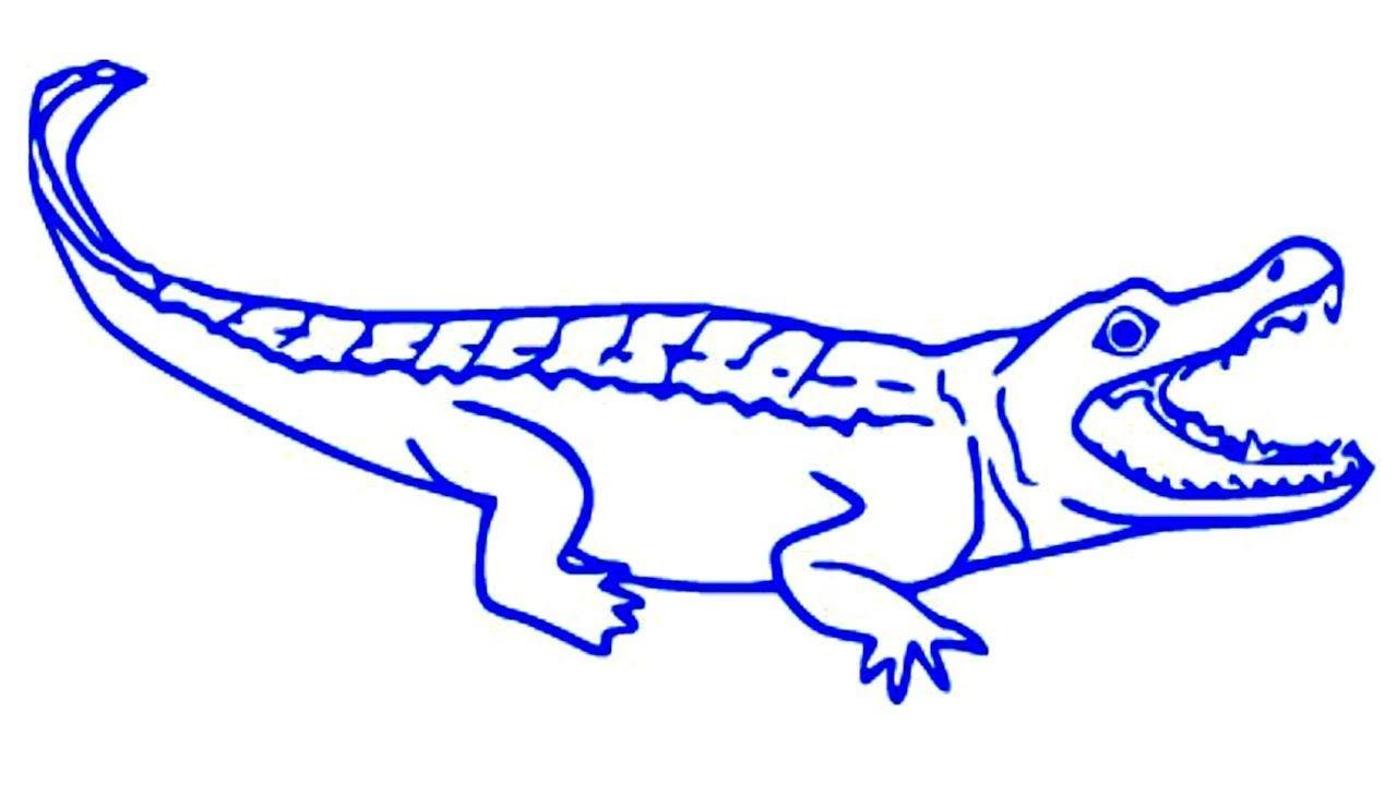 Coloring Pages-Alligator drawing | cartoon alligator ... - photo#17