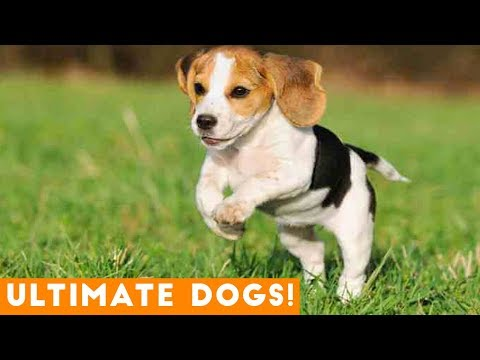 Ultimate Cute and Funny Dogs of 2018 | Funny Pet Videos