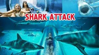 Горка Shark Attack в аквапарке Aquaventure Palm Jumeirah (Атлантис), Дубай ОАЭ(Waterpark Aquaventure, Palm Jumeirah, Dubai, UAE. Аквапарк Aquaventure, Пальма Джумейра, Дубай, ОАЭ. Настоящий оазис в пустыне! Аквапарк..., 2015-09-18T06:05:09.000Z)