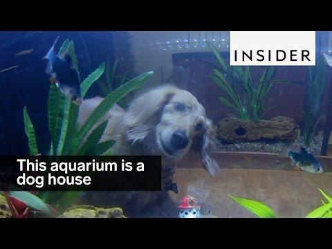 This aquarium is a dog house